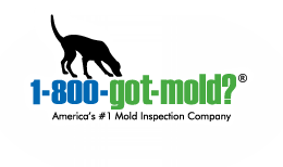 1-800-GOT-MOLD.png