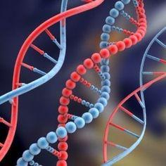 DNA_MTHFR